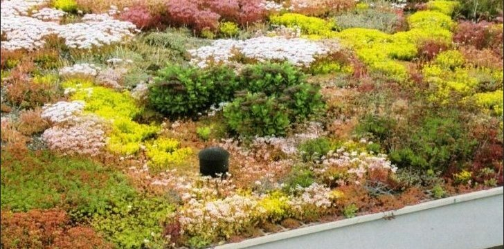 Kaip apželdinti stogą ar namo sieną